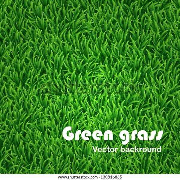 Green grass background. Vector texture