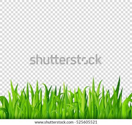 grass transparent background on green grass border on transparent background vector grass border on transparent background stock vector royalty