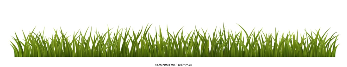 Green grass border, realistic vector illustration of green grass, on white background, EPS 10 contains transparency.