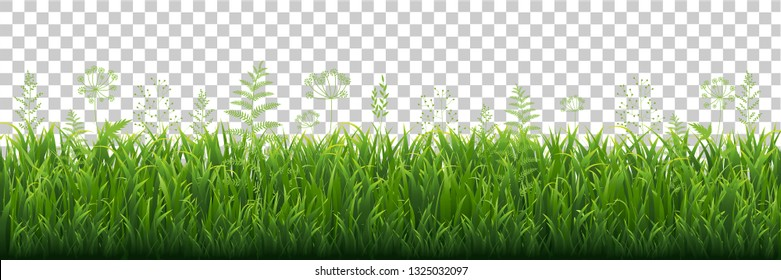 Green Grass Border With Transparent background, Vector Illustration