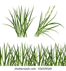 Green grass, horizontal seamless pattern. The Bush grass.Vector illustration.