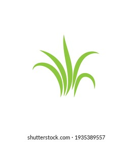 Green grass ilustration vector design
