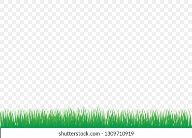 green grass isolate on white background
