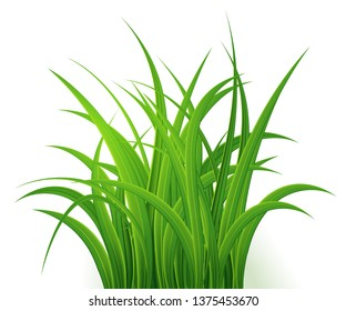 Green Grass  Isolated on white background,tuft of grass,fresh spring grass,panoramic view,3d. Vector Illustration