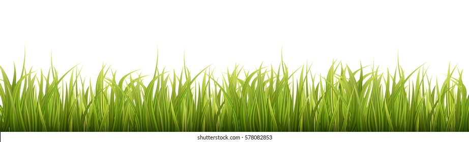 Green grass isolated on white background. Spring or summer. Wide, long format good for web. Vector Illustration.
