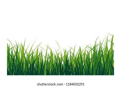 Green grass isolated. Vector illustration