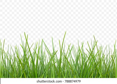 Green grass meadow border vector pattern. Spring or summer plant lawn. Photo realistic grass on a transparent background.