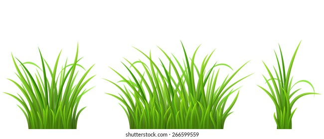 Green grass set on white background, vector illustration