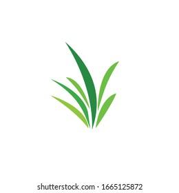 Green grass. Spring. Gazon. Vector icon. web version.