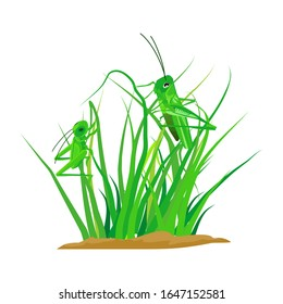Green grass vector there is an isolated grasshopper on a white background. Illustration vector