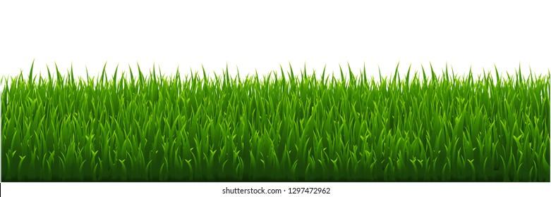 Green Grass White background, Vector Illustration