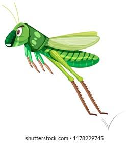 A green grasshopper on white background illustration