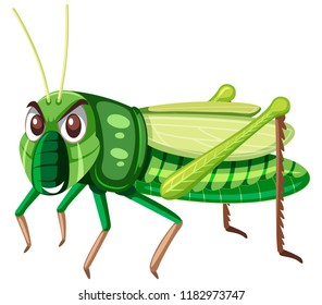 A green grasshopper on white background illustration