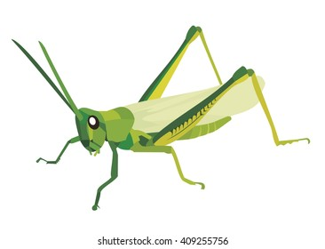 Green grasshopper on a white background vector Illustration