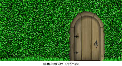 Green hedge. Background vintage wall ivy and wicket. Ancient door and gate. Entrance to the park