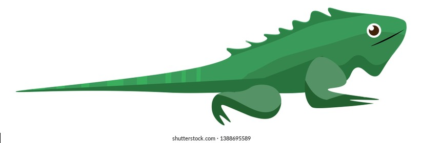 Green Iguana  Iguana iguana  a large  arboreal  most commonly herbivorous species of lizard of the genus Iguana  and considered an invasive species  vector  color drawing or illustration