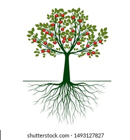 Green Isolated Apple Tree with Roots on white background. Red Apple Fruits. Vector Illustration and concept. Plant in garden.