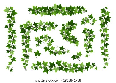 Green ivy creeper branches isolated on white background. Hedera vine frames and borders, botanical design element. Vector illustration of hanging or wall climbing ivy plants