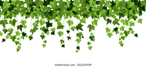 Green ivy plant vector border, spring climbing vine leaf frame, floral creeper liana illustration on white. Garden greenery background, decorative hanging twig, realistic nature art. Ivy plant texture