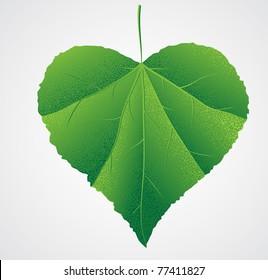 green leaf heart shape