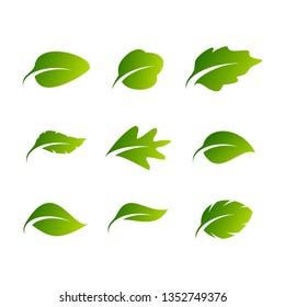 green leaf icons design template vector