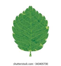 Green leaf, Vector illustration Eps 10