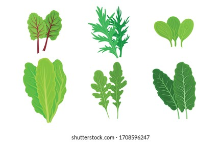 Green Leafy Vegetables with Lettuce and Arugula Leaves Vector Set