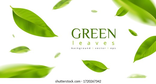 Green leaves background 3d illustration vector