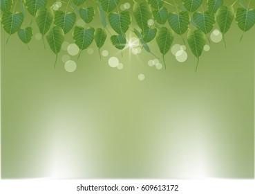 Green leaves background,Bodhi tree