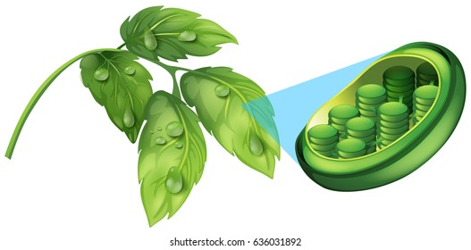 Green leaves and cell plant diagram illustration