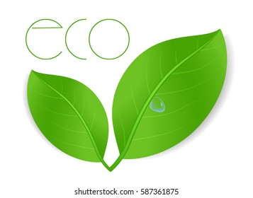 green leaves with drop of water. Vector concept environmental
