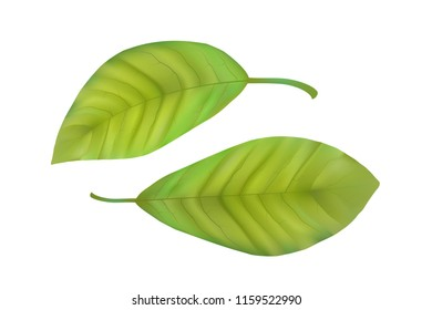 Green Leaves Clipart Stock Vectors Images Vector Art