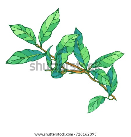 Green leaves on branch isolated on white background stock vector illustration