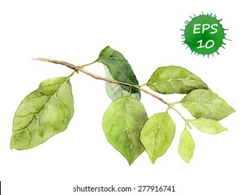 Green leaves on branch. Watercolor vector. Botanical illustration