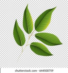 Green leaves on transparent background illustration