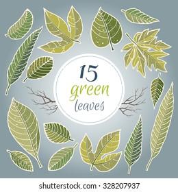 Green leaves set.