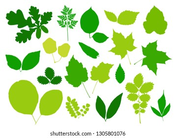 Green leaves set isolated on white background. Vector illustration - Shutterstock ID 1305801076