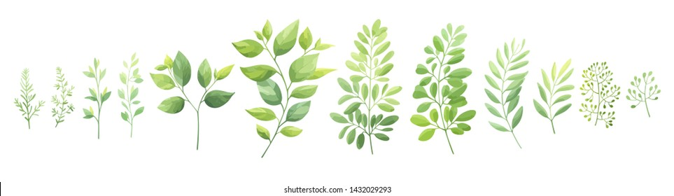 Green leaves set isolated on white background. Vector illustration.