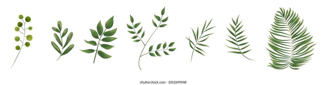green leaves in the style of watercolor .greenery herbs, leaves, eucalyptus branches, fern fronds. Vector natural, botanical, elegant template