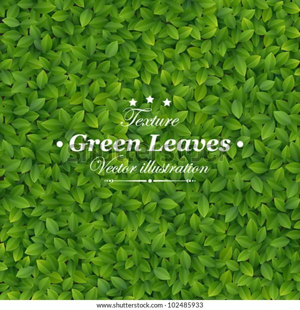 Green leaves texture. Vector illustration.