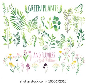 green leaves, twigs and flowers, flat doodle vector illustration isolated on white background. Cute set, collection of green leaves, herbs, flowers and branches, eco decoration elements
