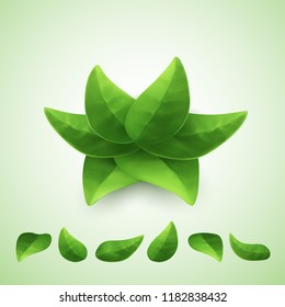 Green leaves, vector isolated.