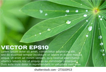 Green leaves and water drops realistic background with a placeholder. Vector illustration EPS10.