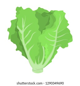 Green lettuce. Fresh healthy ingredient for salad cooking. Organic vegetarian nutrition. Vector flat illustration