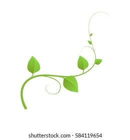 The green liana isolated on white background, vector illustration