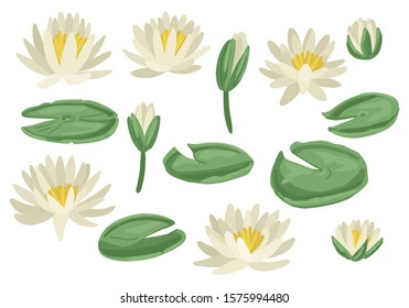 Green lily pads with Lotus flowers. White flowering water lilies and green leaves. Floral vector with aquatic plants. Isolated on white background. Flat style cartoon illustration.