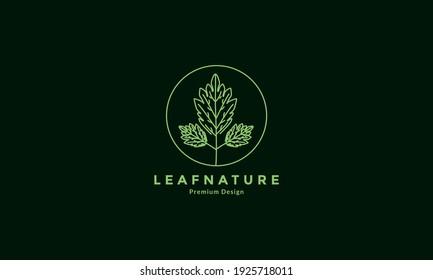 green lines mint leaf circle logo design vector icon symbol illustration
