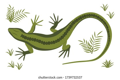 Green lizard vector illustration. Reptile with long body and tail, four legs and green skin. Design for poster, web site.