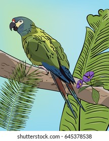 Green macaw parrot on branch. Vector Tropical background with leaves.