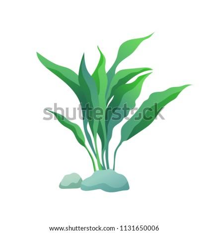 green marine decorative aquarium algae seaweed stock vector royalty